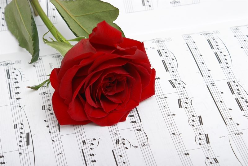 A red rose compliments the notes of music.